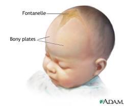 Fontanelle bone area